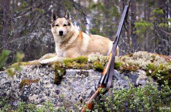 Интенсив-программа в Чехию - Охота