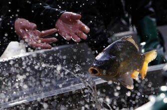 Интенсив-программа в Чехию - Рыбалка
