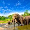 Корпоратив на Шри-Ланке (Канди) - Сафари-тур