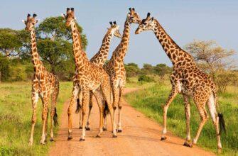 Инсентив - отдых в Танзании. Групповые туры в Танзанию